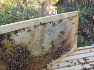 healthy honey reserve - double-sided